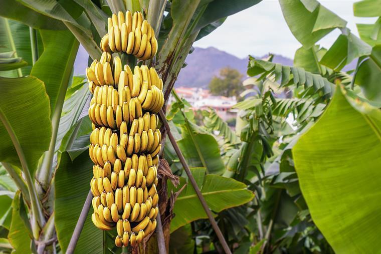 Die Regierung von Madeira will den Primärsektor mit Schaltern zur Unterstützung der Landwirte stärken